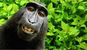 Monkey Selfie Blog pic